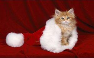 Christmas-Kitten_1