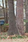 IMG_15632 trees
